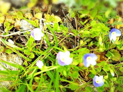 春のおとずれ#7