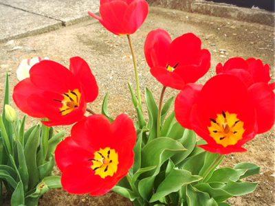 春のおとずれ#13