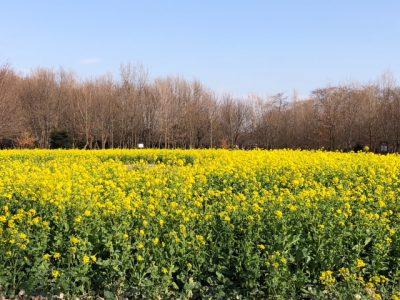 春の訪れ♫