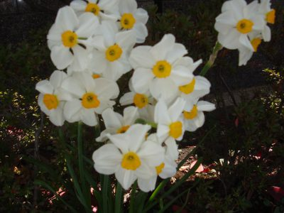 春のおとずれ#16