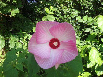 夏の花たち♫